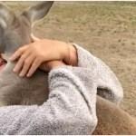 Affectionate Kangaroo Gives His Human a Giant Hug