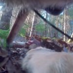 A Wild Wolf Wearing a Collar Camera Gives First Ever Personal Tour of the Woods Outside Human Presence