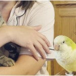Vocal Quaker Parrot Hilariously Recites Tweety Bird's Famous Line When He Sees a 'Puddy Tat'