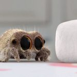 Lucas the Spider and Best Friend Findley the Fly Jump Around the House on a Pair of Springy Marshmallows
