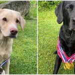 Olive and Mabel Take Home Bronze and Gold Olympic Medals for Performing Well in Dog Related Sports