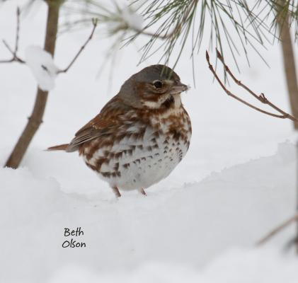 Marquette 2014 Christmas Bird Count
