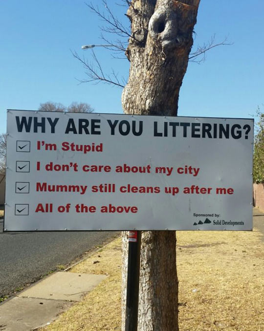 Why Are You Littering