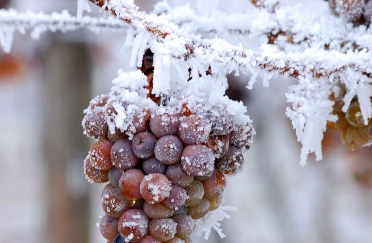 De una princesa de hielo y el vino homónimo…
