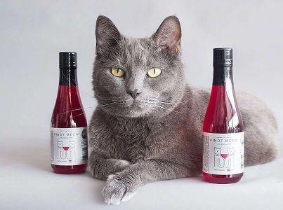 Pinot Meow, la historia de Apollo