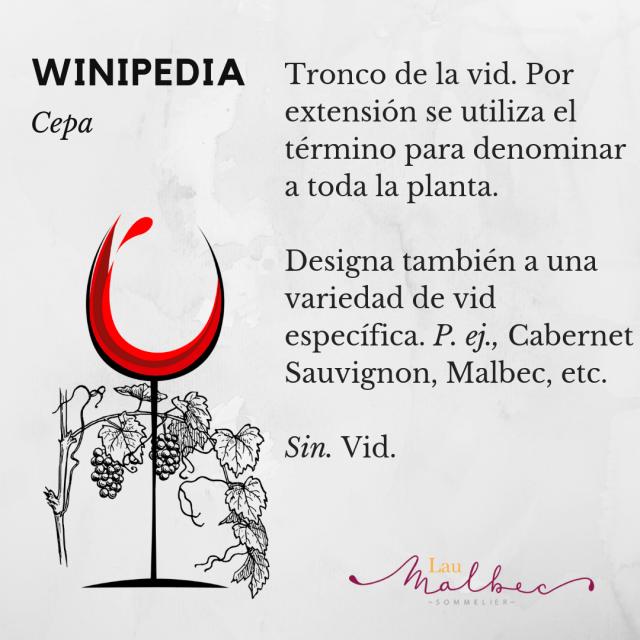 Qué es una cepa vinos Winipedia