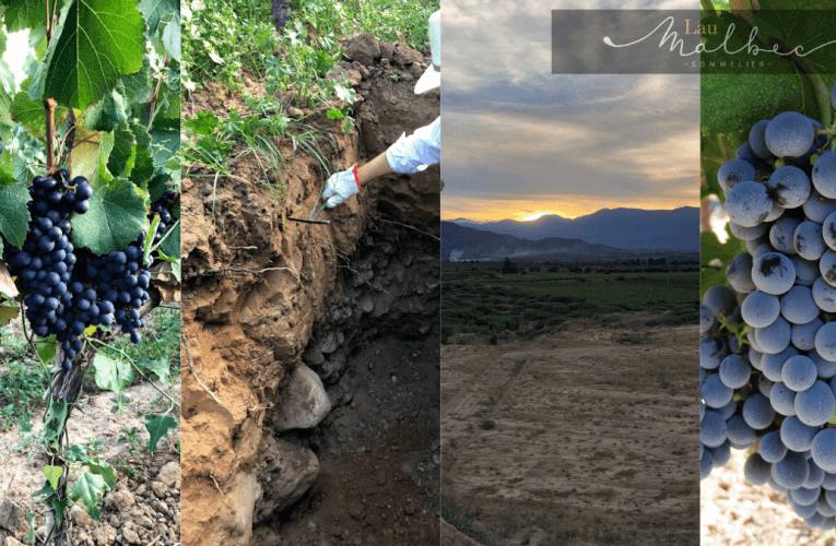 Todo sobre el vino de Bolivia en 3 entrevistas
