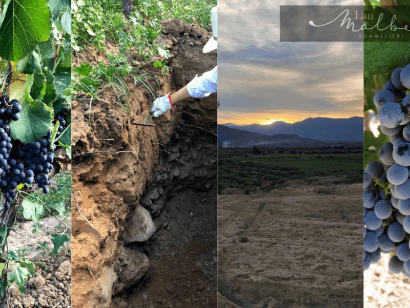 Vino de Bolivia terruño suelos sustentabilidad