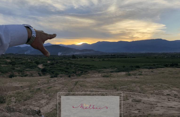 El factor altura en los vinos de Bolivia