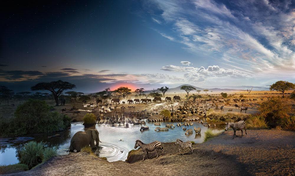 Stephen Wilkes Serengeti