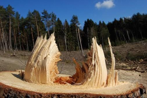 Split tree trunk_art