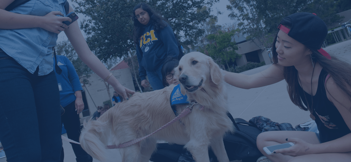Therapy dog with UCI students on campus