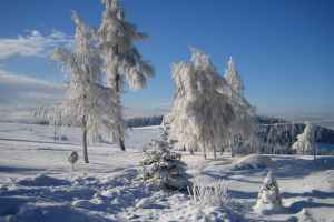snow capped trees
