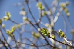 Spring (7)