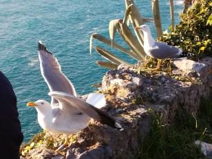 Seagulls, Porto Venere, I