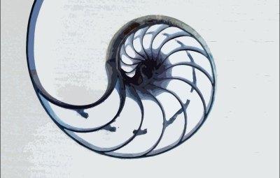 Nautilus-white-background