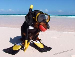 snorkel-diver-costume