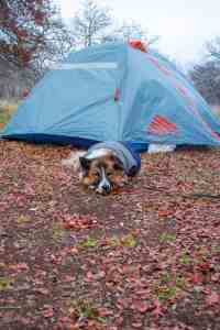 Camping with Dogs - www.lauraenroute.com
