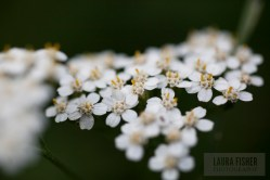 Busted out the macro lens at Prieuré de Vausse! I was diggin' these tiny white flowers.