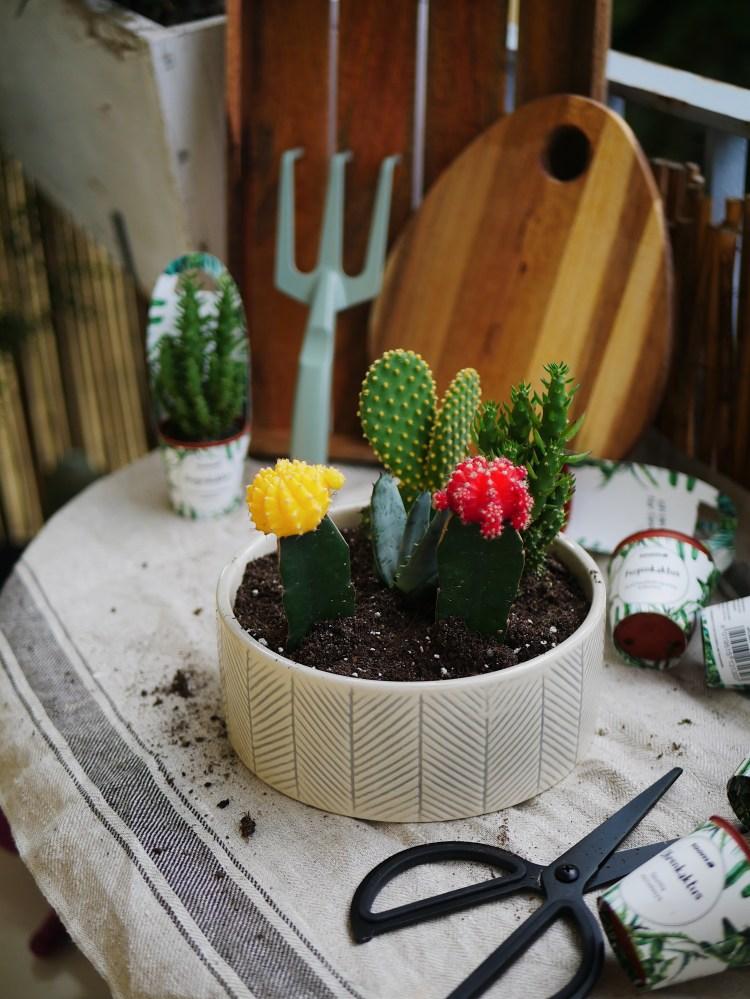 DIY Mini Kakteen in Schale / Terrarium