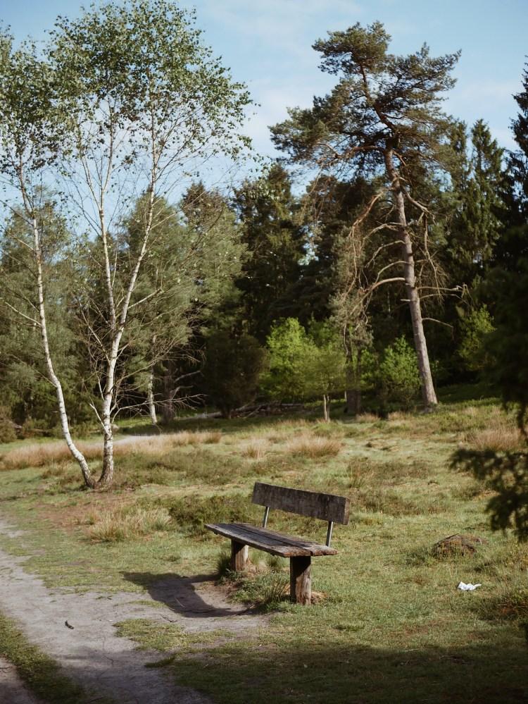 Buesenbachtal Lueneburger Heide