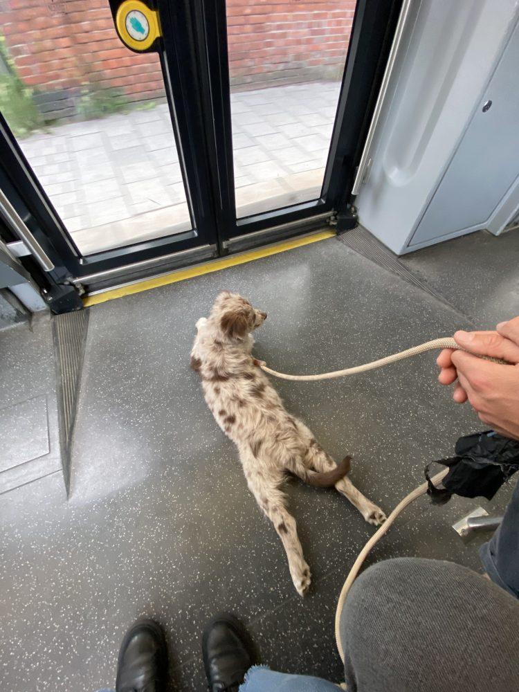 Lottis erste Fahrt mit der Tram