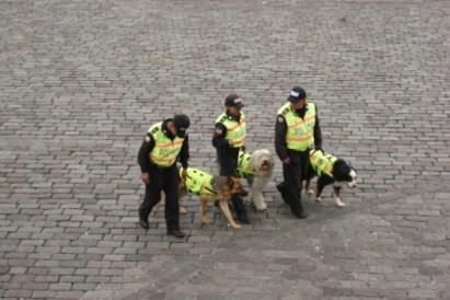 Polizisten mit ihren Hunden
