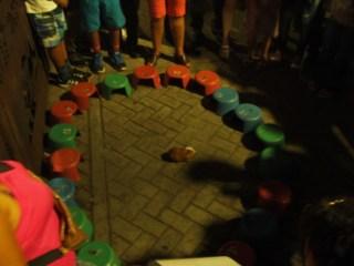 Meerschweinchen-Roulette
