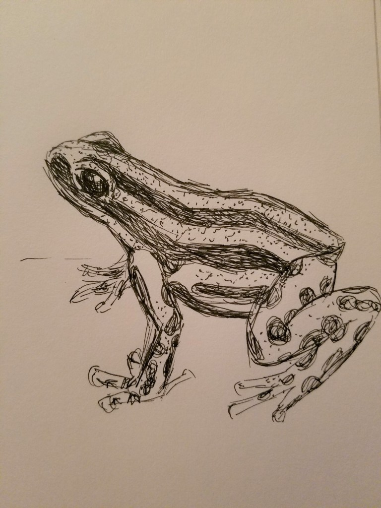 Sketchbook view of Poisonous by Laura Jaen Smith. Black and white ink drawing of frog.