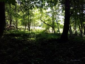 Photo of woods near Stockbridge Falls by Laura Jaen Smith