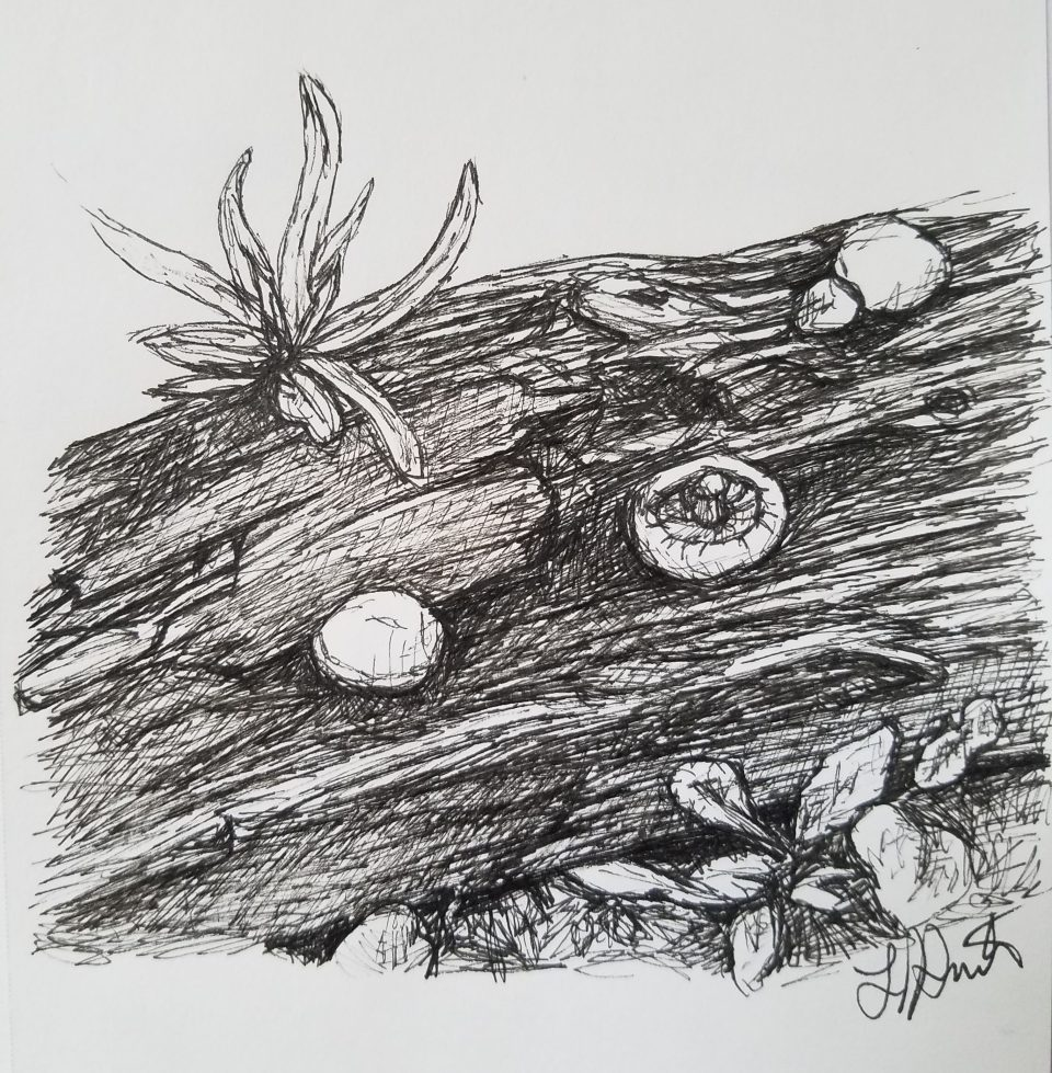 Mushrooms and Log by Laura Jaen Smith, Black and white ink drawing of a log with mushrooms growing on it.