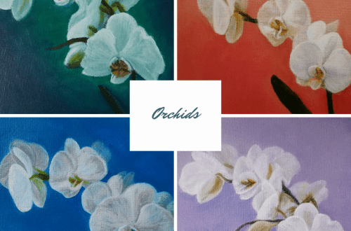 Orchids blog cover