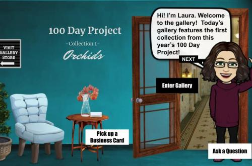 100 day project collection 1: orchids blog cover