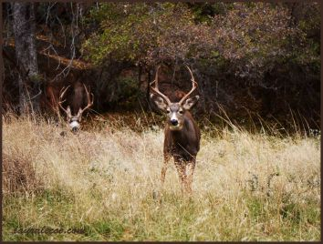 The deer imposter