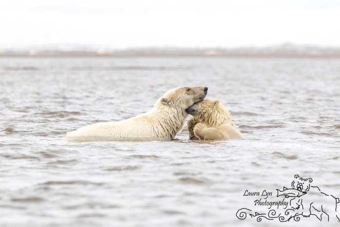 polar-bear-kaktovik-september-19-1-of-1-watermark-blog