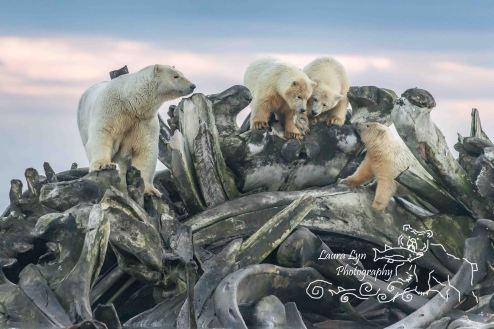 polar-bears-september-19-2016-34-of-35-40-of-1-watermark