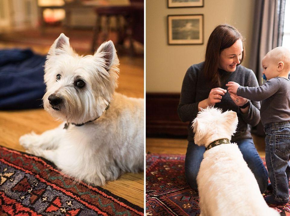 westie, dog, furever loved, laura matthews, richmond, glen allen, virginia, photographer, lifestyle, west highland terrier,