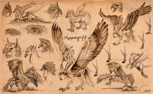 hippogriff_sketches_by_silver_iruka-d7gbufw