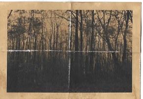 Woods 9
