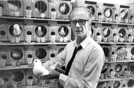 las palomas locas de Skinner