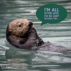 All Otter Love