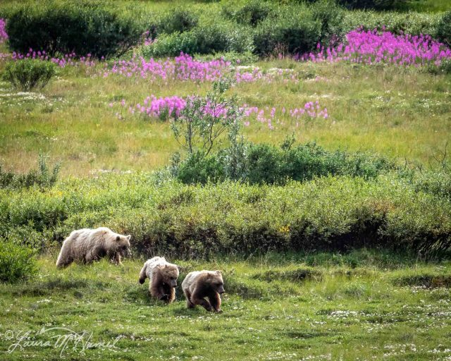 Alaska2019-201.jpg
