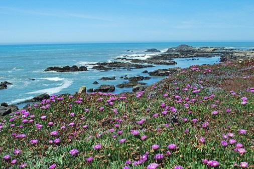 4cali coast