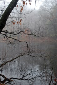 11misty morning reflections on the lake
