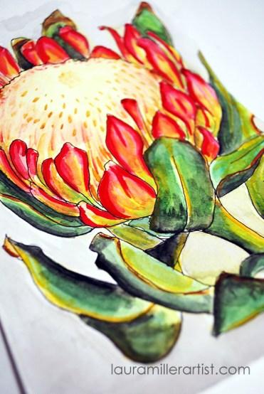 1protea flower sketch watercolor