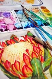 2protea flower sketch watercolor