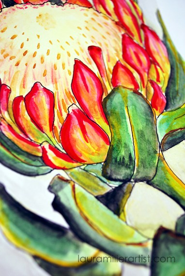 6protea flower sketch watercolor