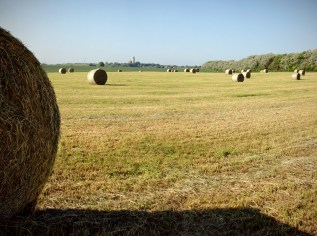 Feld bei Arkona