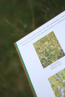 Pflanzen im Nationalpark