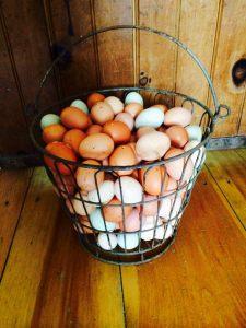 eggscolored
